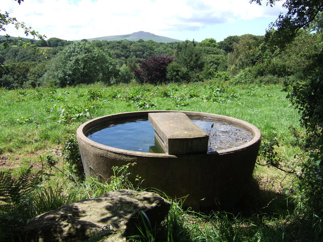 Cattle trough with distant Carningli