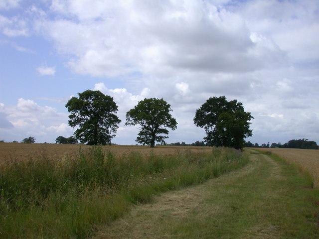 Field boundary trees near Ermine Street