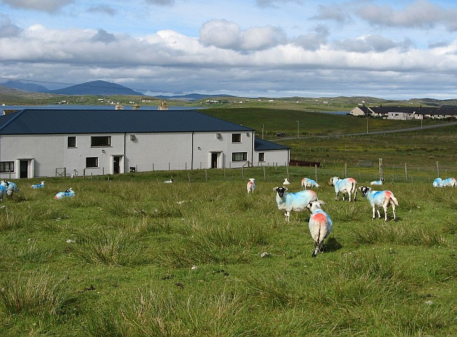 Colourful sheep at Breascleit Community Centre
