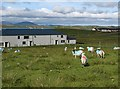 NB2134 : Colourful sheep at Breascleit Community Centre by Eileen Henderson