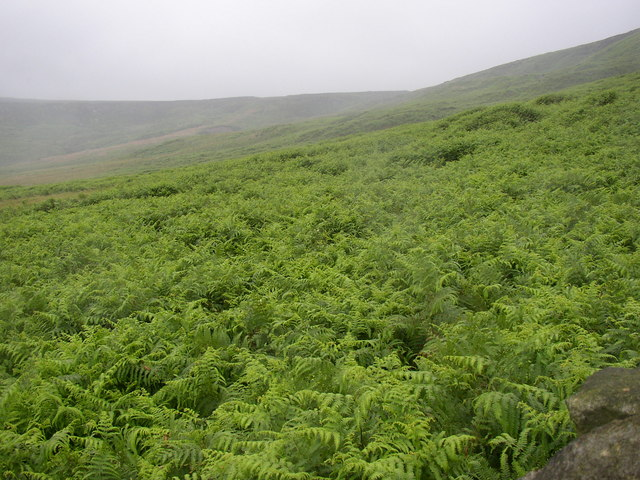 Bracken at White Holes, Meltham