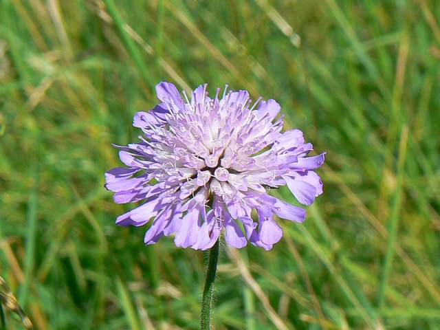 Blue flower, Hinton Parva combe