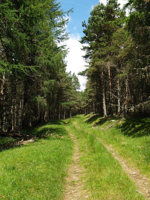 Forest Track, Glenhead Plantation