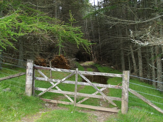 Gate and Forest, Glenhead Plantation