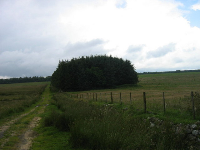 Footpath and Catcherside Plantation