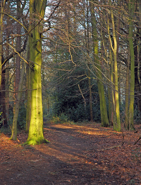Wither Wood - Denby Dale