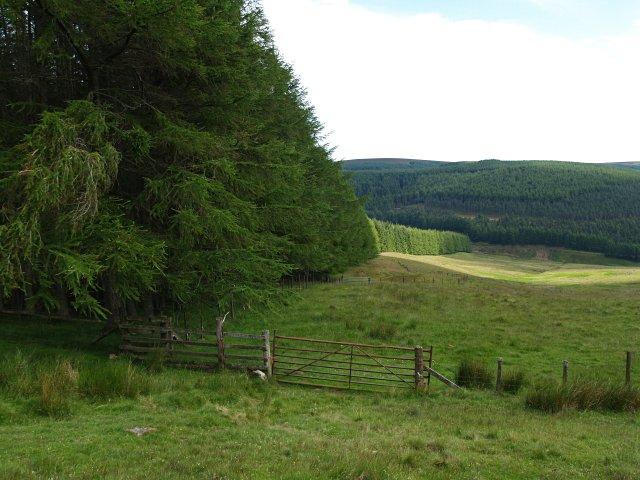 Forest edge, Drumshade Plantation
