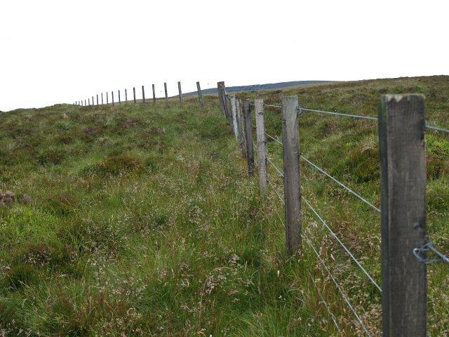 Fence, Eskielawn