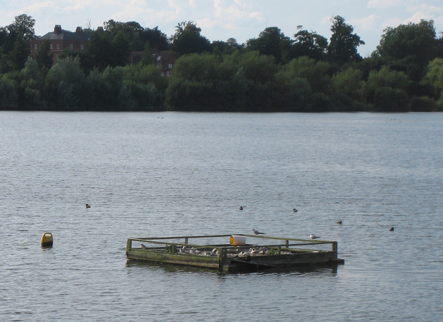 Artificial island for terns on Alton Water