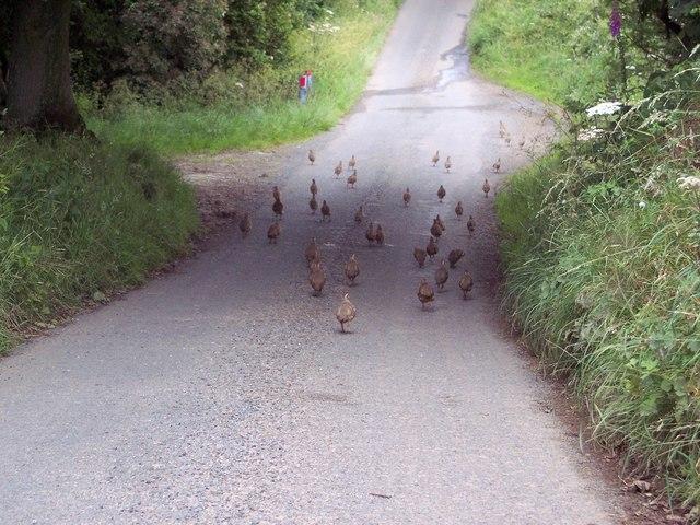 Rush Hour in Farndale