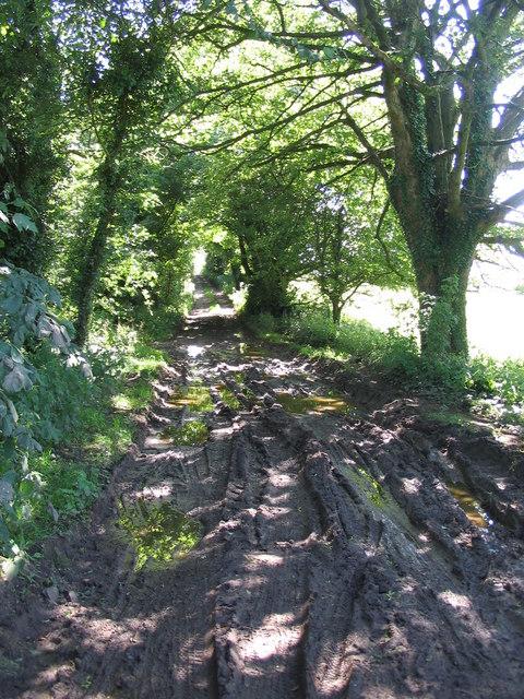 Fosse Way near Shepton Mallet
