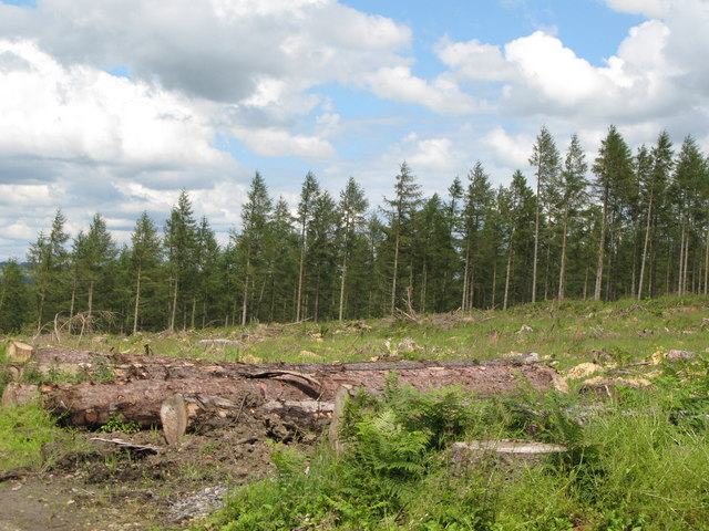 Felling in Dipton Wood