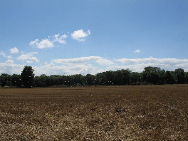 Farmland near Chelynch