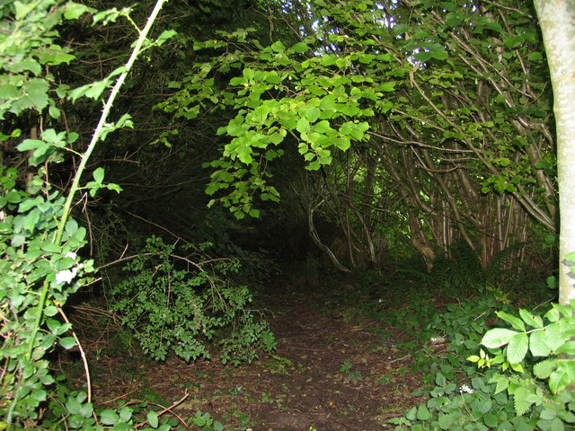 Banked and hedged lane, Llanddetty Church