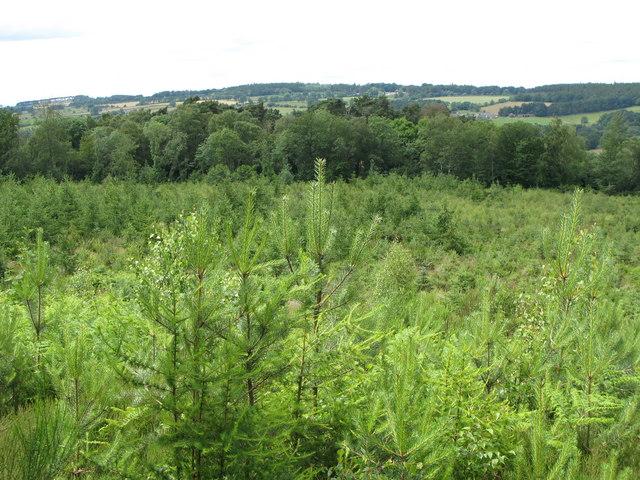 Re-planting in Dipton Wood
