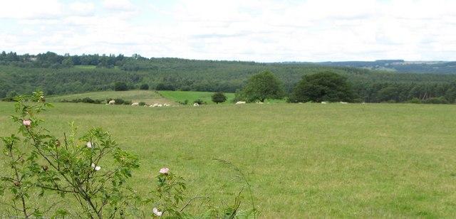 Pastures near Dipton Wood