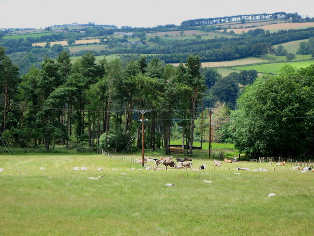 Pastures and woods west of the B6306 Hexham to Slaley road