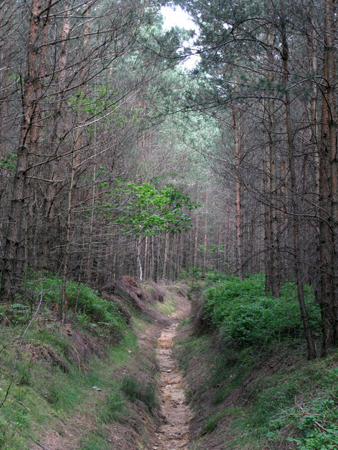 Path in Dipton Wood east of Lightwater Cottages