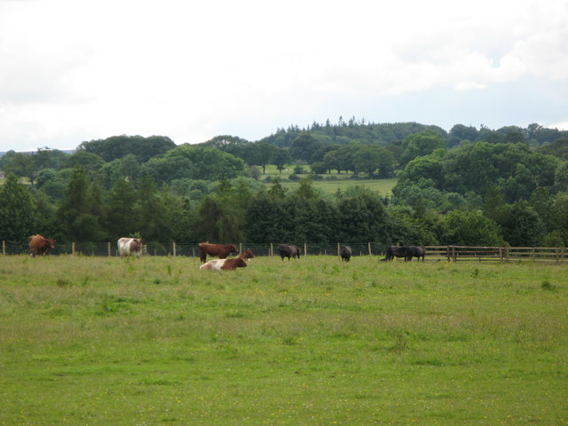 Pastures and woods near The Linnel Stud (2)
