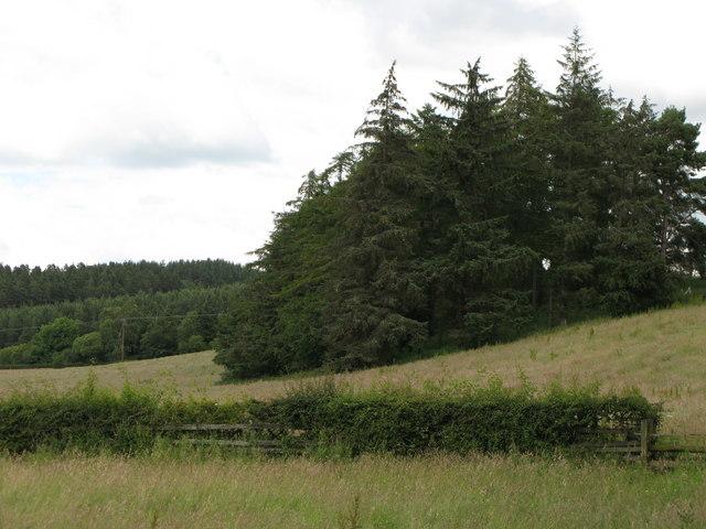 Plantation near The Linnel Stud