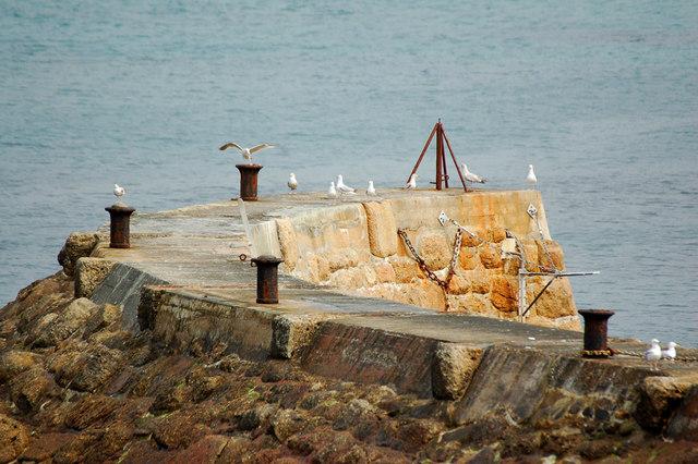 Seagull cobh, Sennen Cove