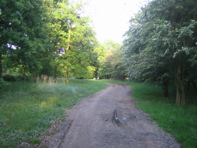 Decoypond Wood near Calvert