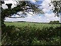 SX2893 : Field beside B3254 by Derek Harper