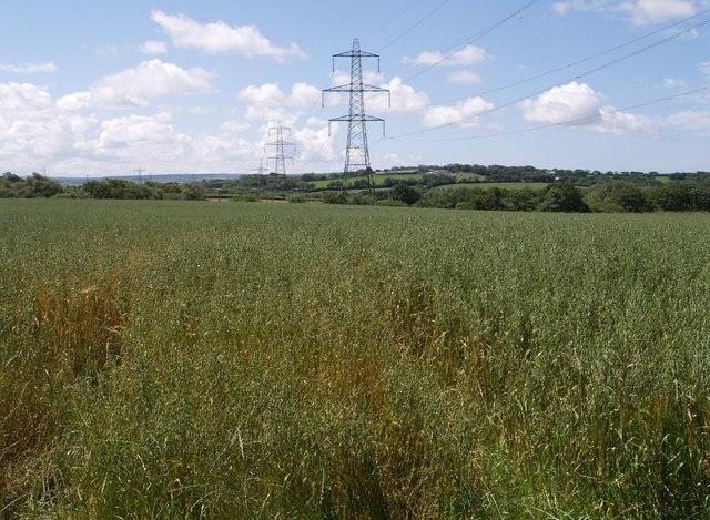 Oat field and pylon line