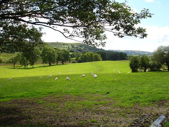 Pasture below Graig Wood