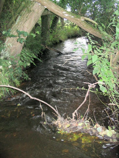 Red Lion Brook