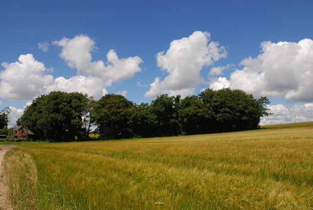 Farmland north of Old Shaftsbury Drove