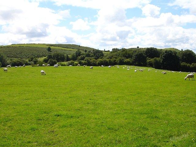 Pasture north of Y Golfa