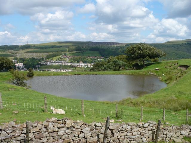 Pond near Cefn Golau Cemetery