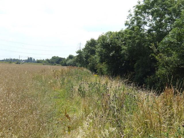 Rape-field and Temple Drain