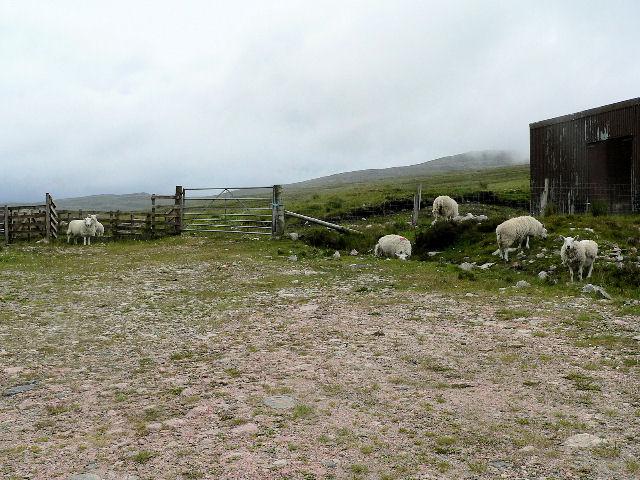 Gate by sheep pen