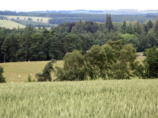 Arable land and woods near Linnel Hill