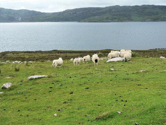 Rough grazing by Loch Eriboll