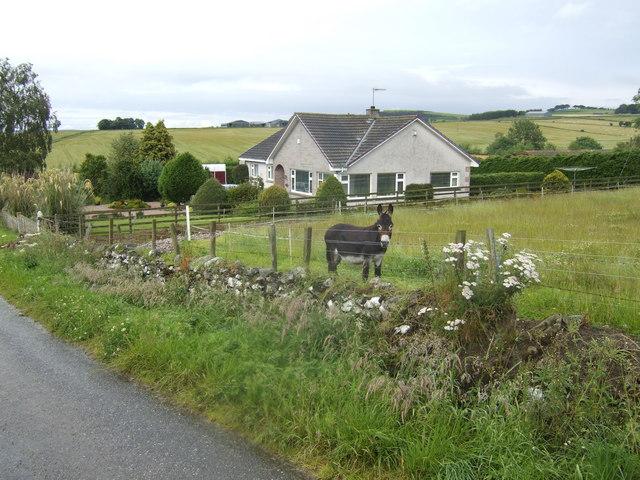 Smithycroft donkey