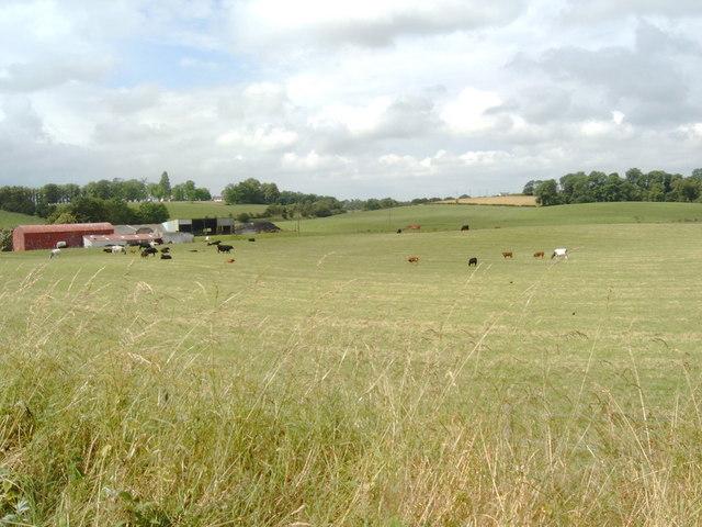Grazing Field at Kirkburn, Lockerbie