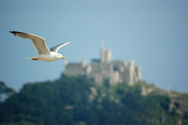 Seagull & St. Michael's Mount