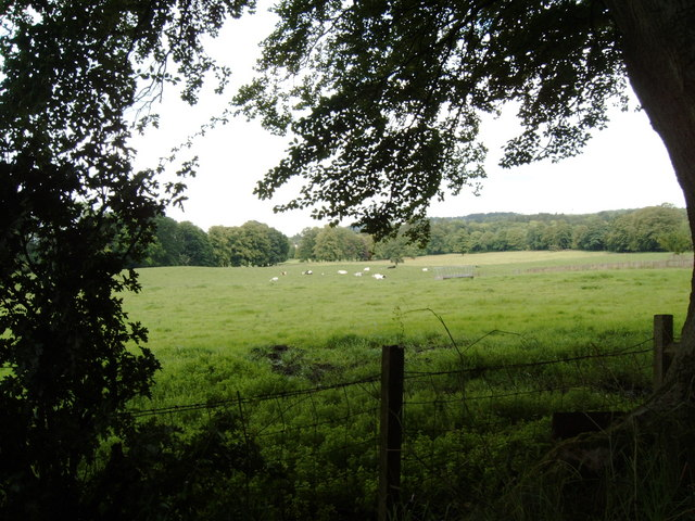 Grazing Field, from a shady lane