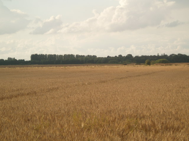 Barley field towards Ashby Decoy
