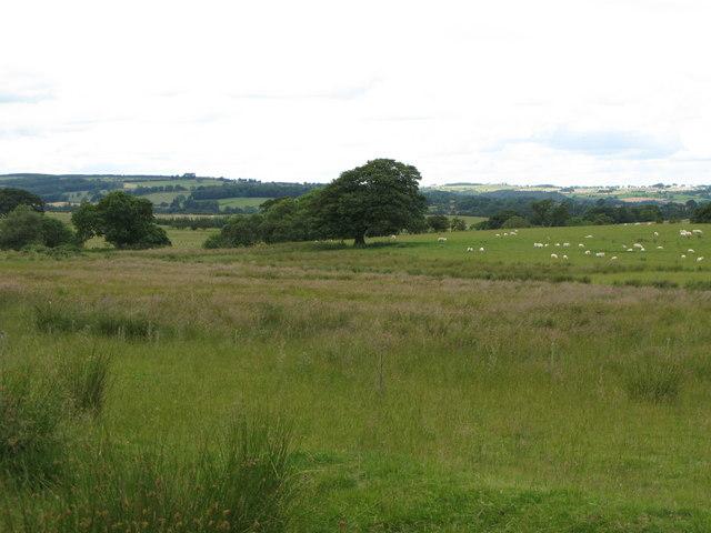 Farmland near Palm Strothers