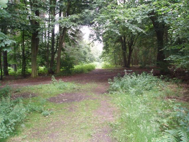Cross Trails in Laughton Forest