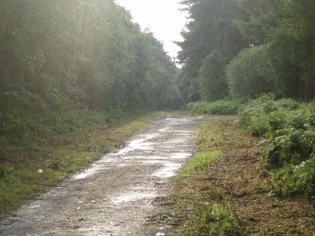 Forestry Road near Rainfords Corner