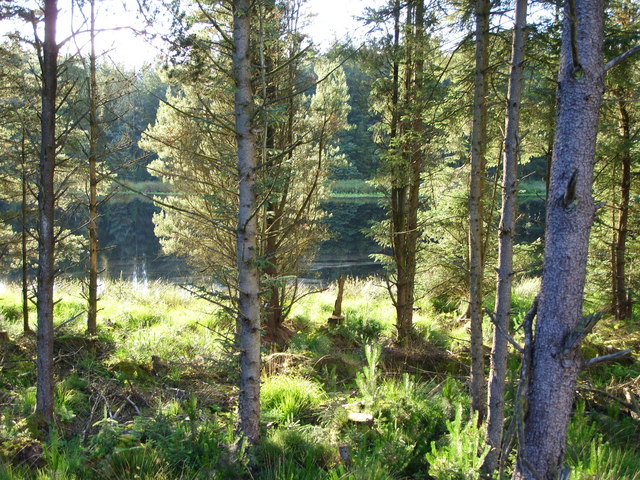 A wee Loch in the woods