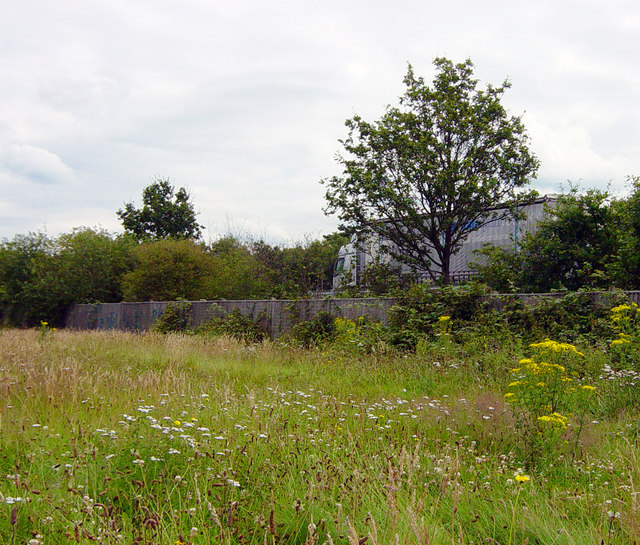 Wild flower meadow adjacent to M3 motorway