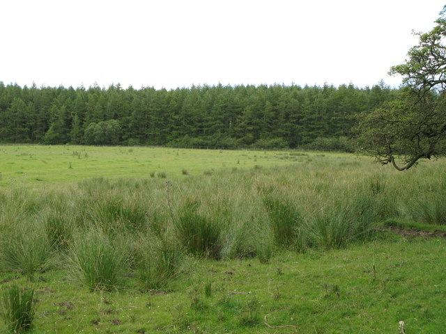 Rough pasture and Building Plantation near Holly Hill