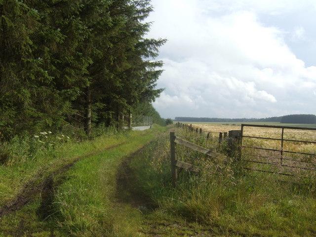 Woodland and barley