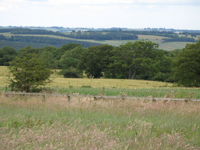 Pasture and woodland near Hillfield Farm (2)